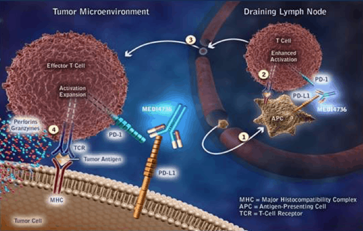 PD-L1 Archives – ADC Review ADC Review Multiple Myeloma