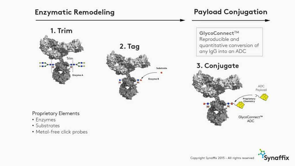 synaffix-illustration-GlycoConnect2